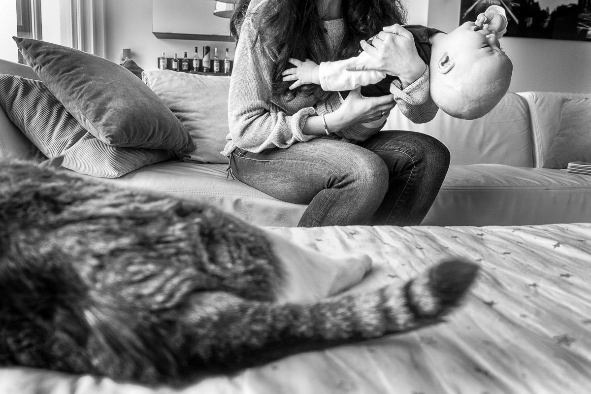 Familienfotos mit Baby und Katze