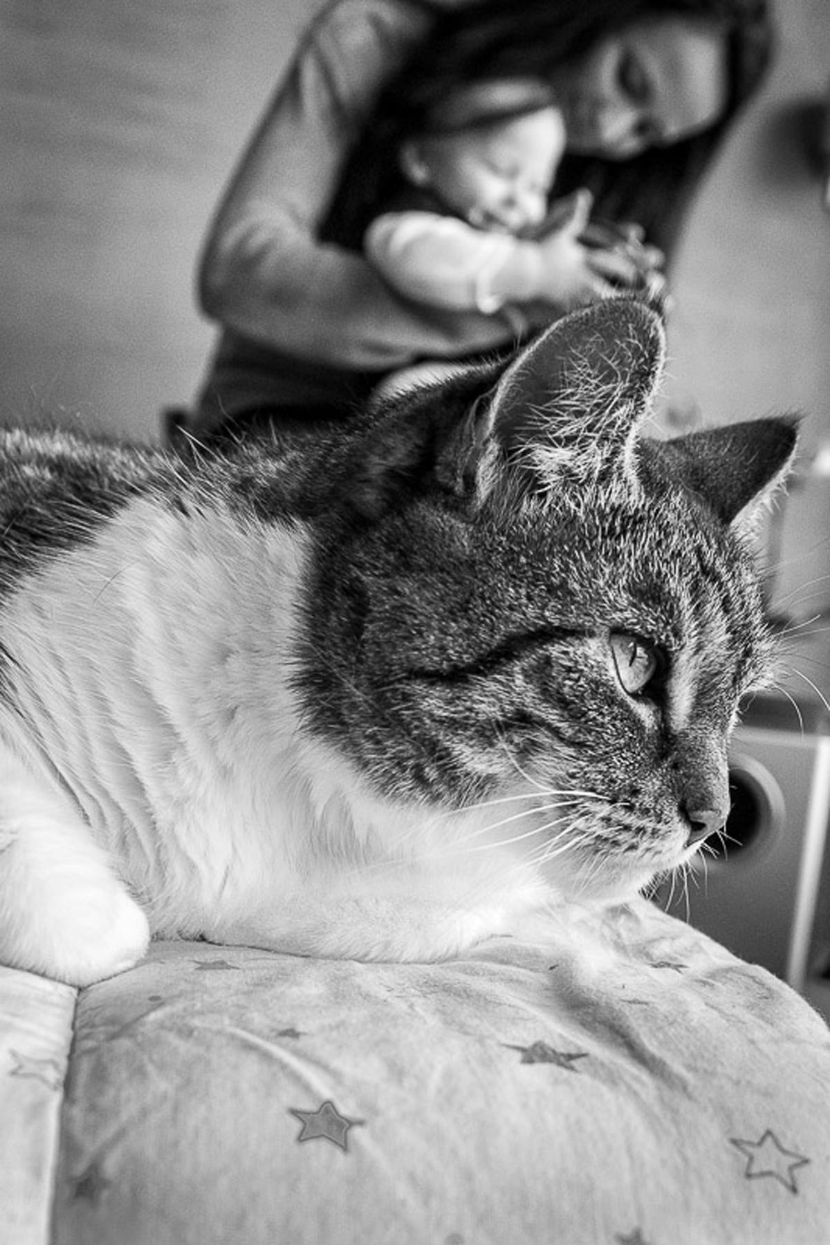 Kinderfotos mit Katze und Familienfotograf Solingen