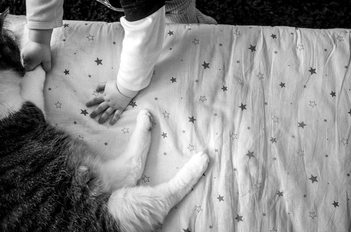 Baby mit Katze für Kinderfotografie Solingen