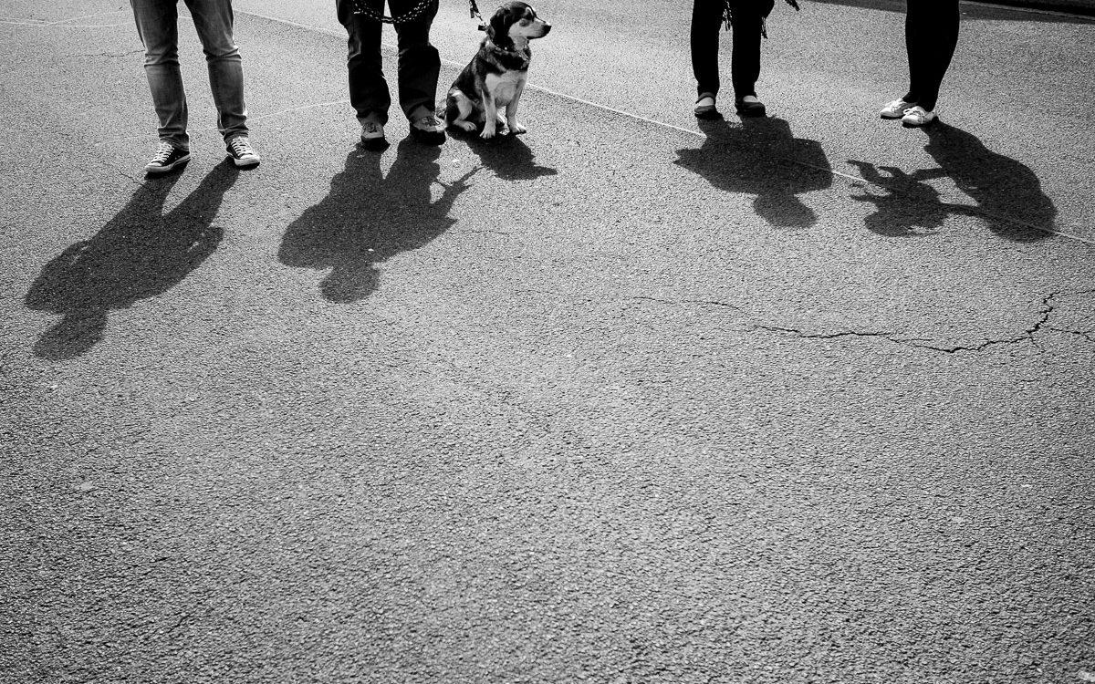 Ein Nachmittag mit Kind und Hund - Familienfotografin Solingen