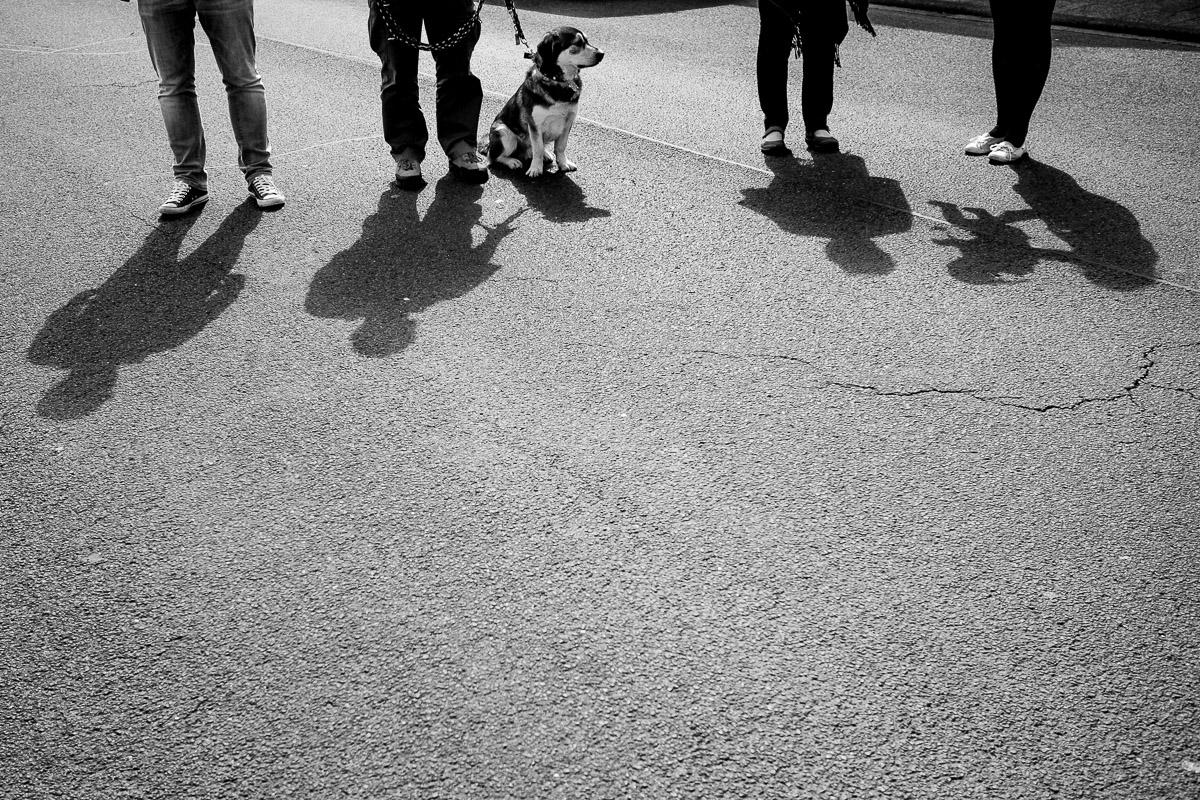 Ein Nachmittag mit Kind und Hund – Familienfotografin Solingen