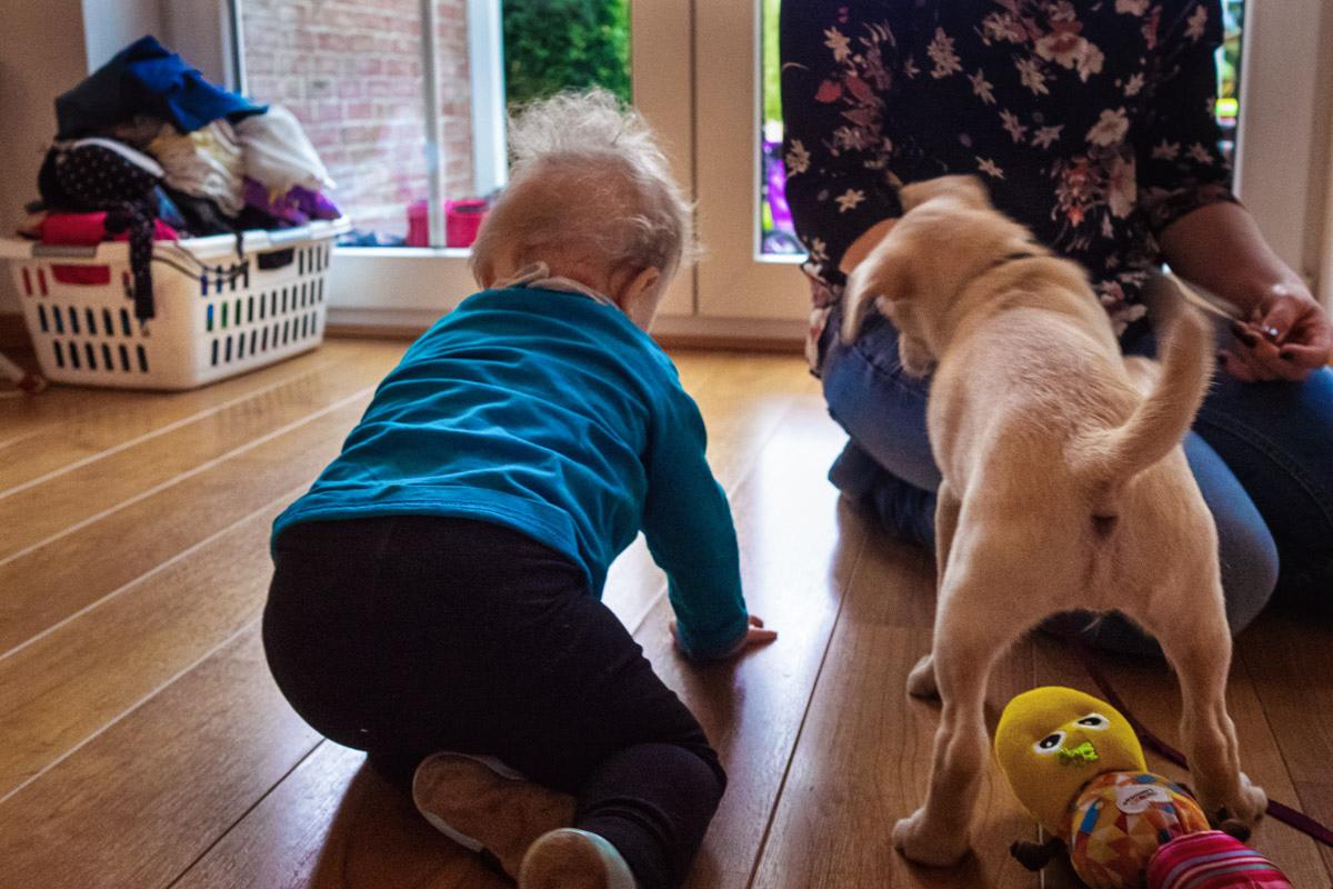 Kleines Kind mit Hund Familienfotograf