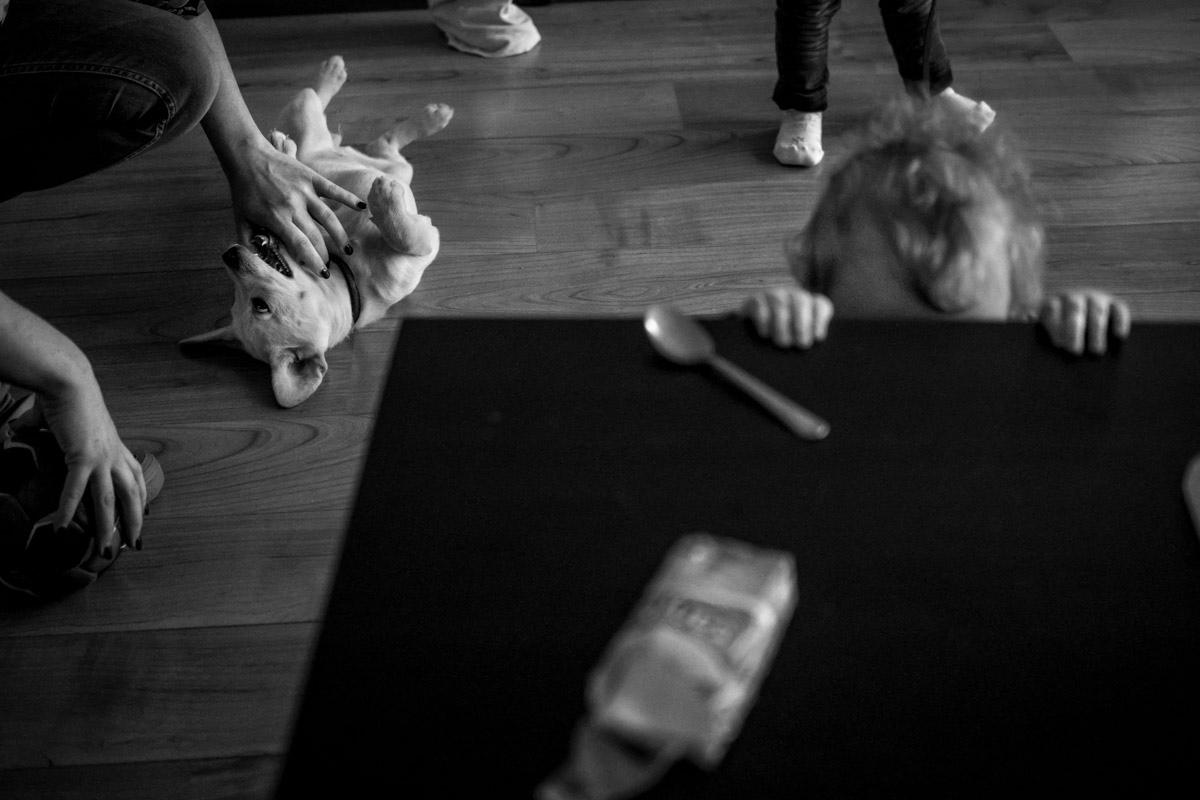 Familienfotos mit Hund Solingen