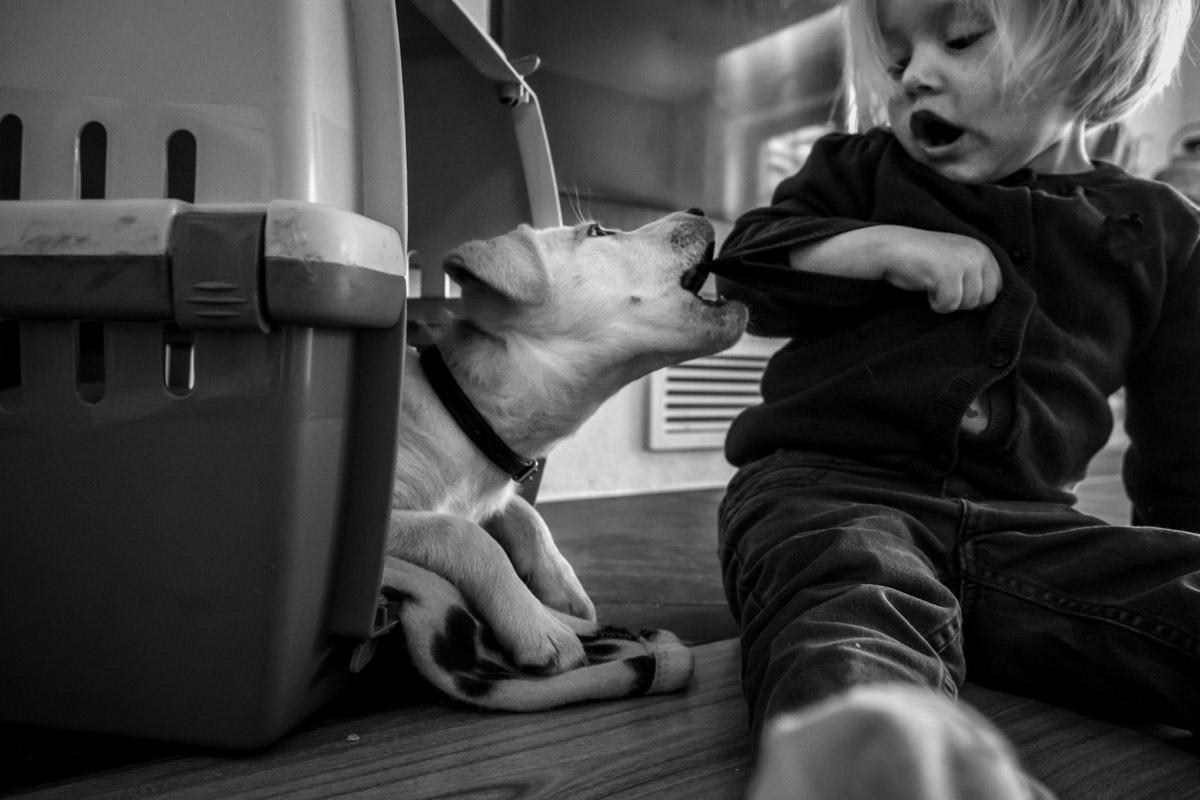 Familienfotos mit Hund