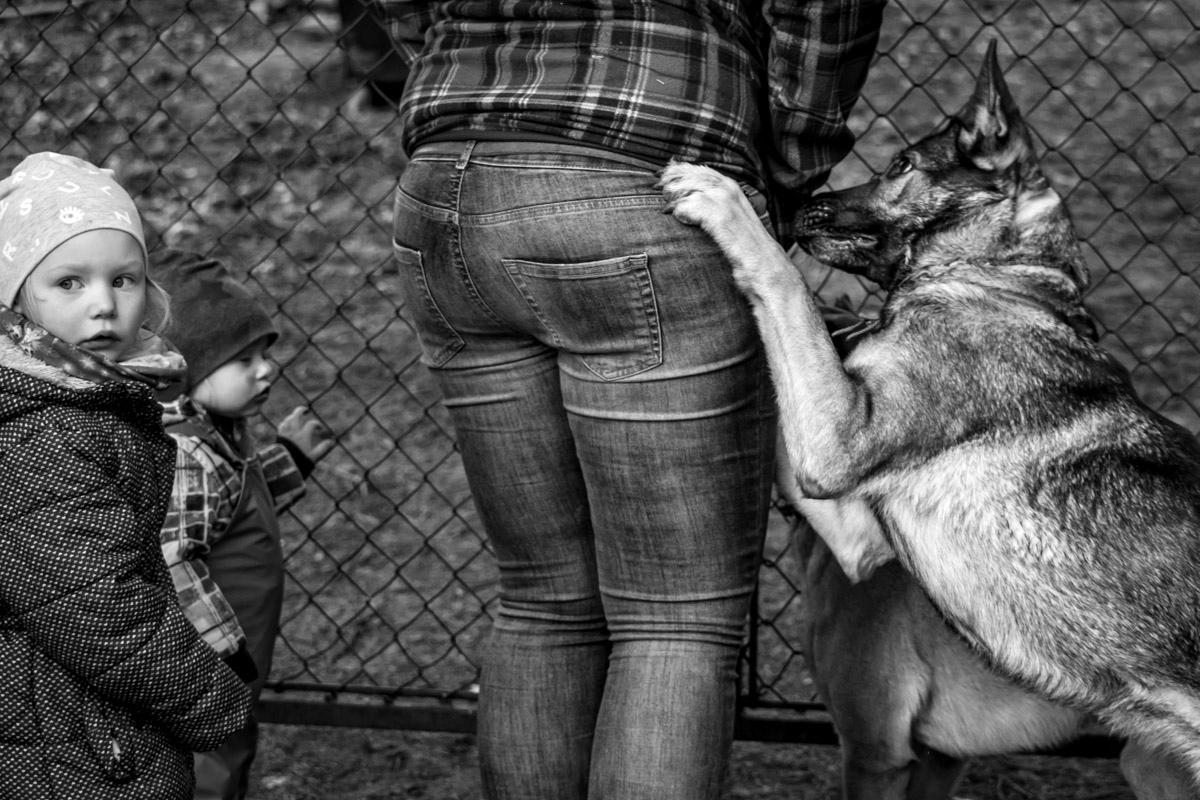 Familienfotograf Familienfotos mit Hund Solingen