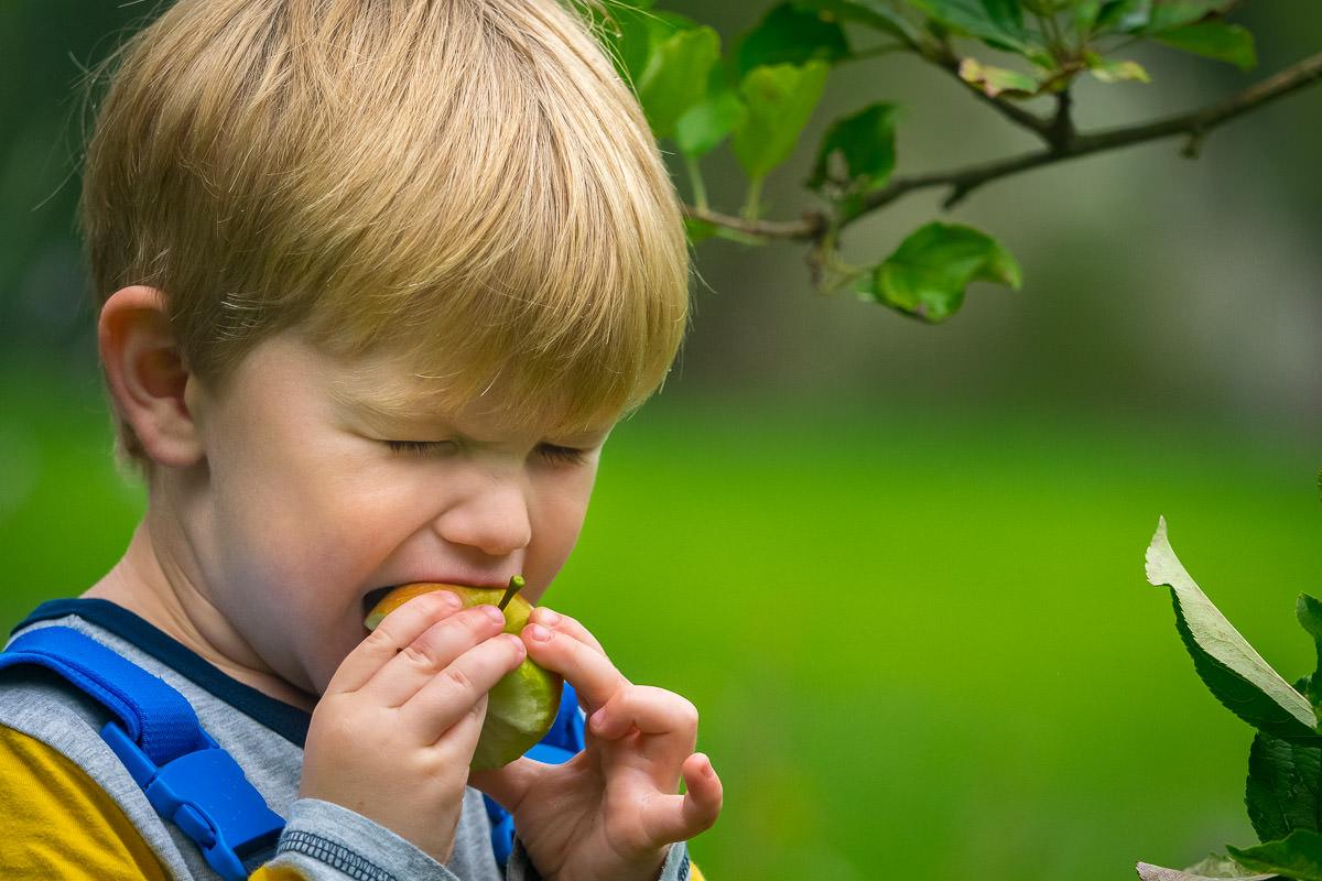 Kind beißt in Apfel Kinderporträts