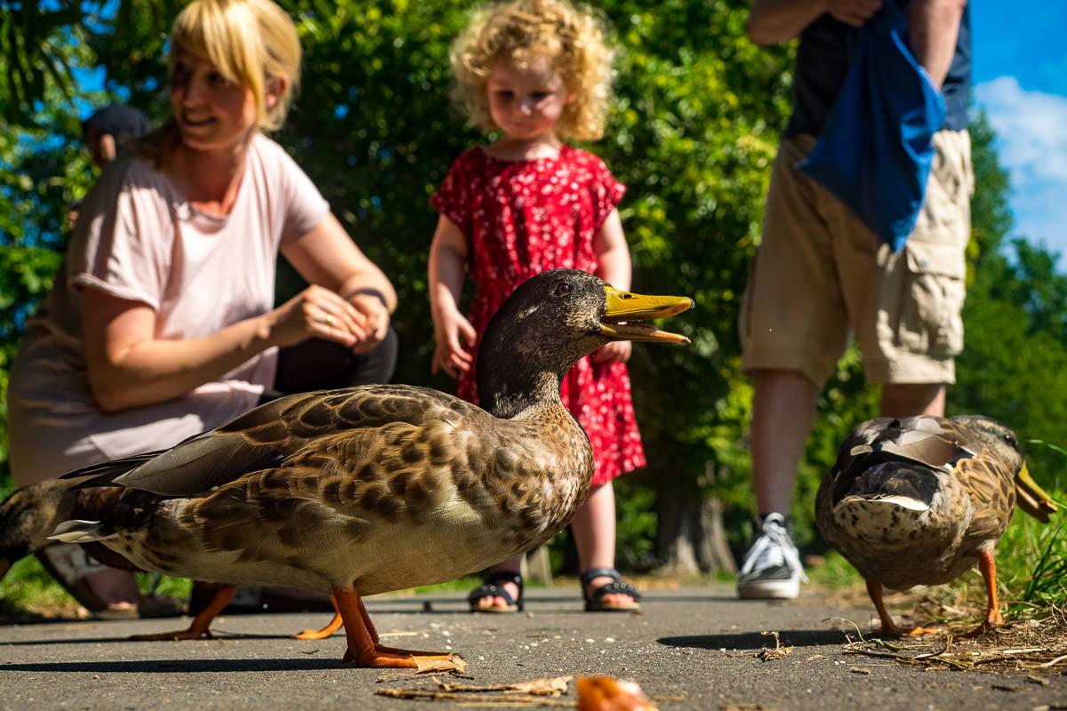 Entenfuettern-mit-Kindern-Familienfotoshooting-Solingen